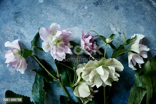 Flower Head, Pistil, The Natural World, Hellebore, Close-up, flat lay