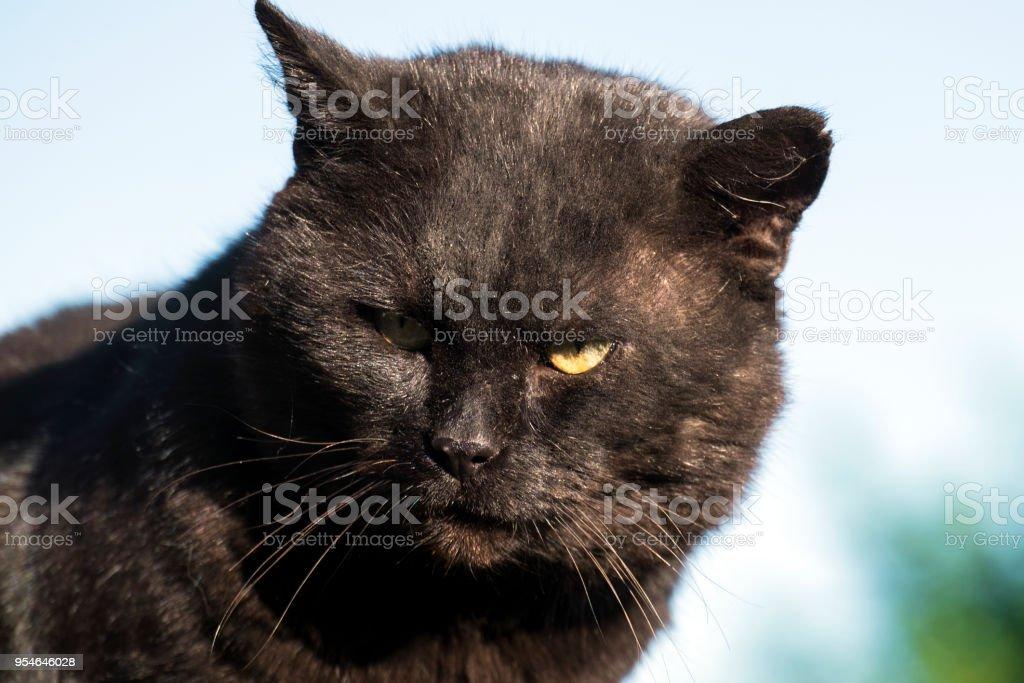 Hellish black cat. Hell black cat bandit and robber stock photo