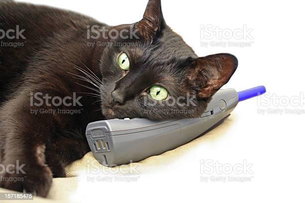 Hello felix the cat picture id157185475?b=1&k=6&m=157185475&s=612x612&h=ehw4gy3a7styhx7ey5fy3tdfipzeiah7qoye80vwwxy=