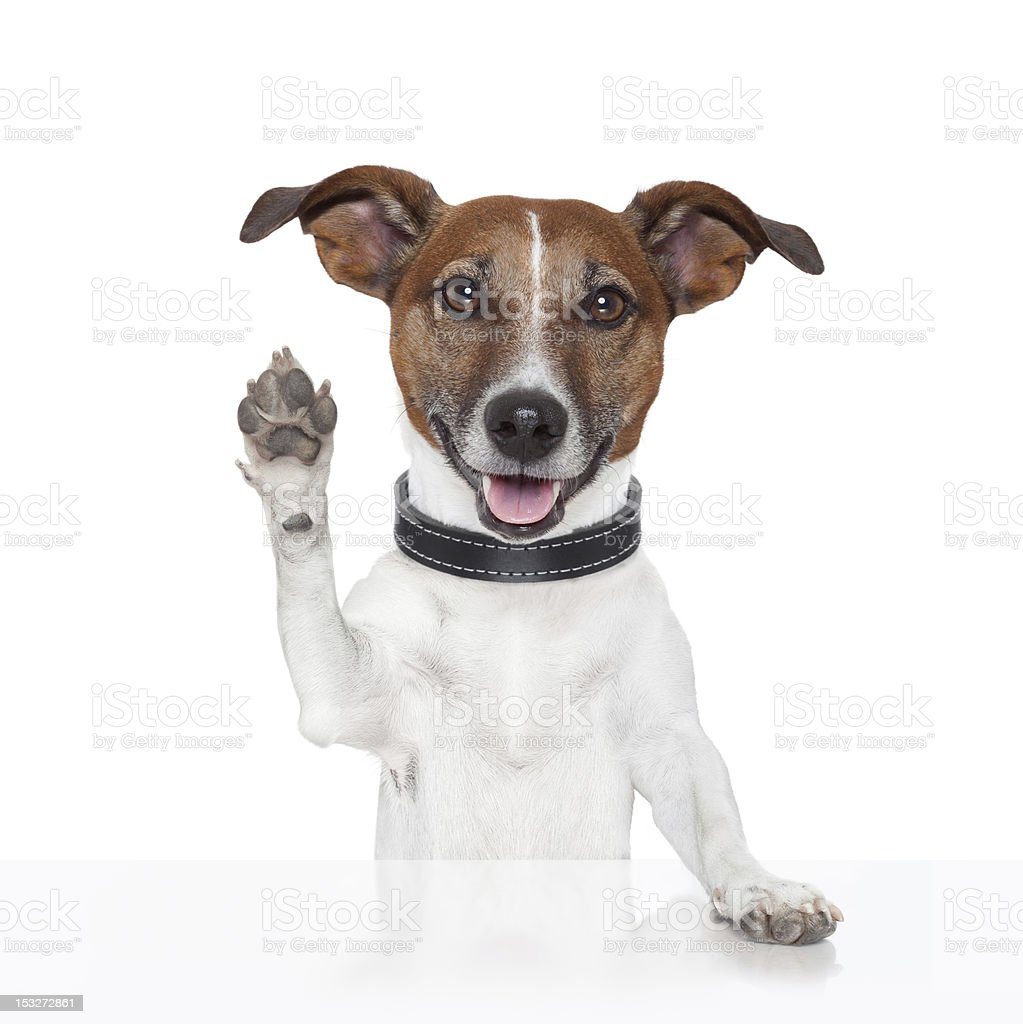 hello goodbye high five dog stock photo