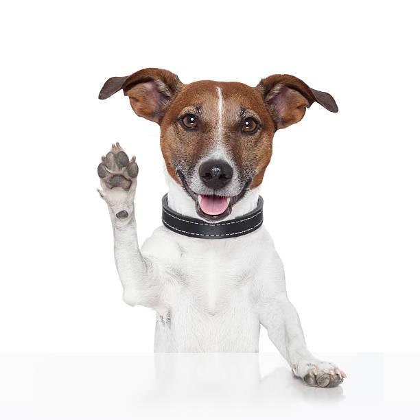 hello goodbye high five dog stock photo
