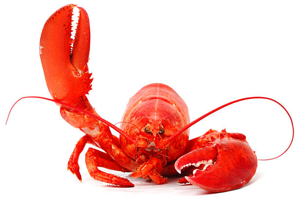 Hello lobster Hello lobster isolated on white background claw stock pictures, royalty-free photos & images