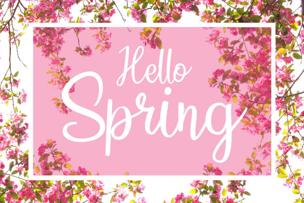 hello spring white text against a pink background with cherry blossom frame - welcome march stock photos and pictures