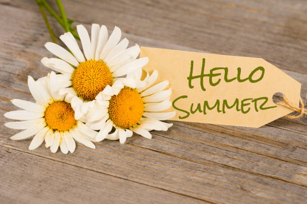 hello summer, camomile flowers on rustic wooden planks stock photo