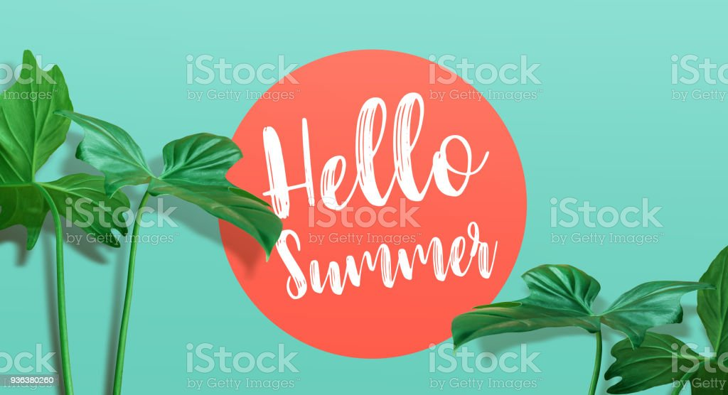 Hello summer text with tropical leaf on color background.summer, nature,fashion concepts stock photo