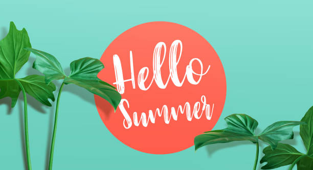 Hello summer text with tropical leaf on color background.summer, nature,fashion concepts - foto stock