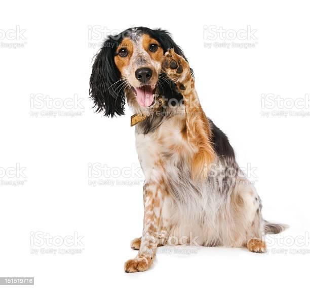 Hello there waving dog picture id151519716?b=1&k=6&m=151519716&s=612x612&h=pzb0hxjzgzg ysicjzdcypl ekyao8dry9gt692sowc=
