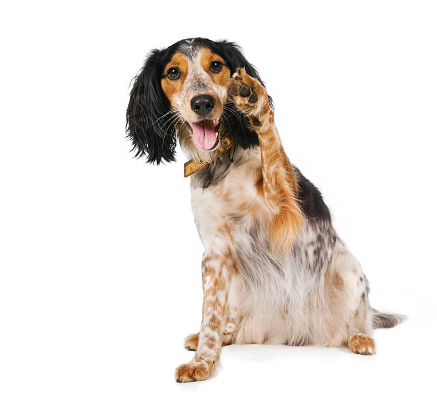 hello there! waving dog        (© lobke peers) - waving stock photos and pictures