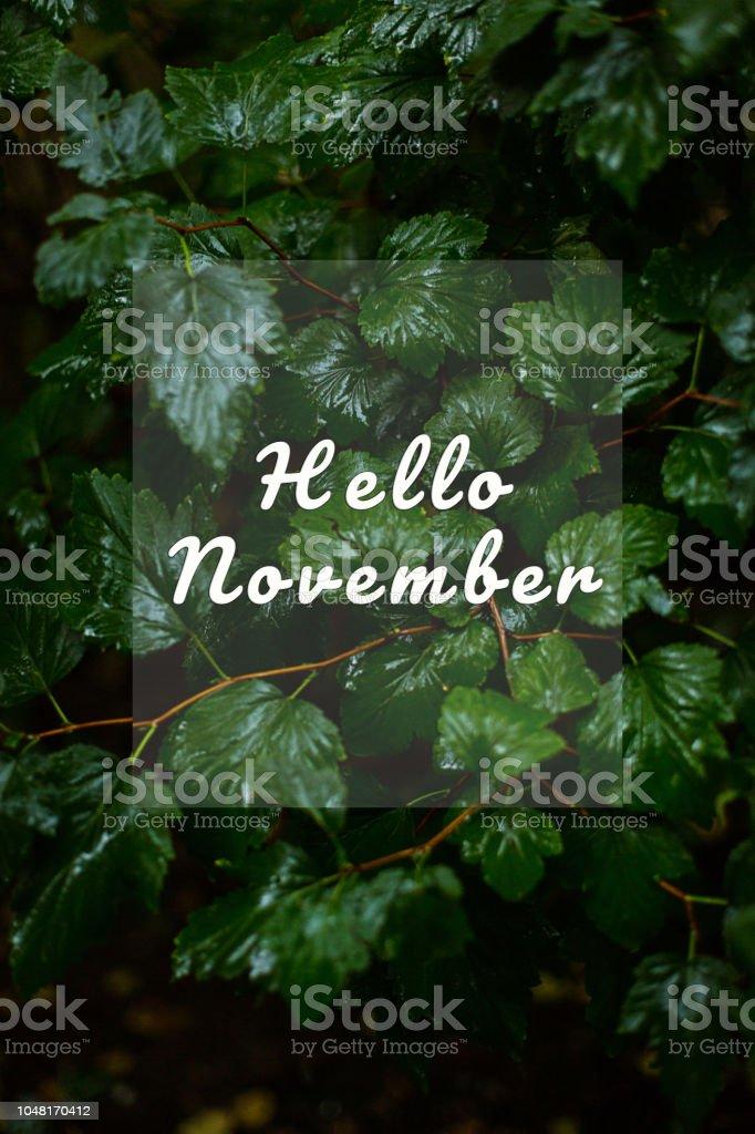 Hellonovemberwallpaperraingreen Leaves Stock Photo