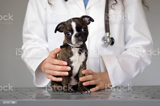 Help me im a sick puppy picture id157377851?b=1&k=6&m=157377851&s=612x612&h= ucuy2o6rff0mbuprf5dbabjrf kdogjw3egiirzya0=
