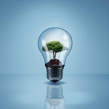 Studio shot of a tree growing inside of a lightbulbhttp://195.154.178.81/DATA/i_collage/pi/shoots/804520.jpg