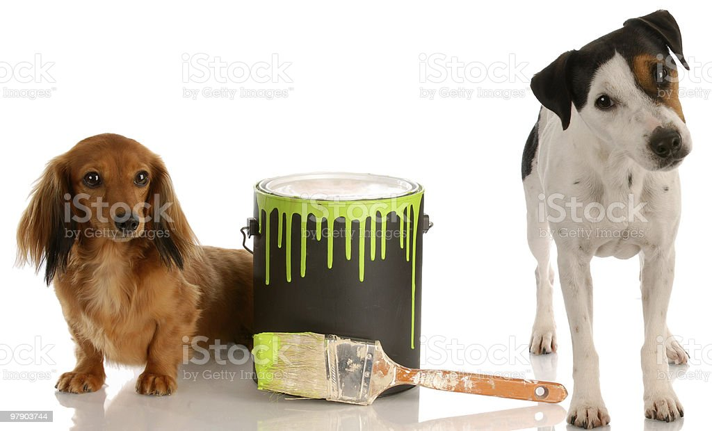 helpful decorating dogs royalty-free stock photo