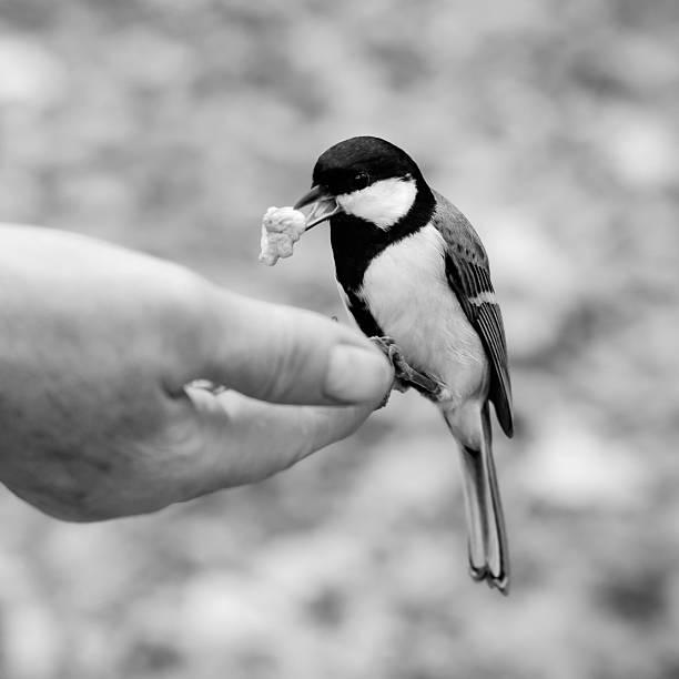 helfende hand - wie lange leben fliegen stock-fotos und bilder