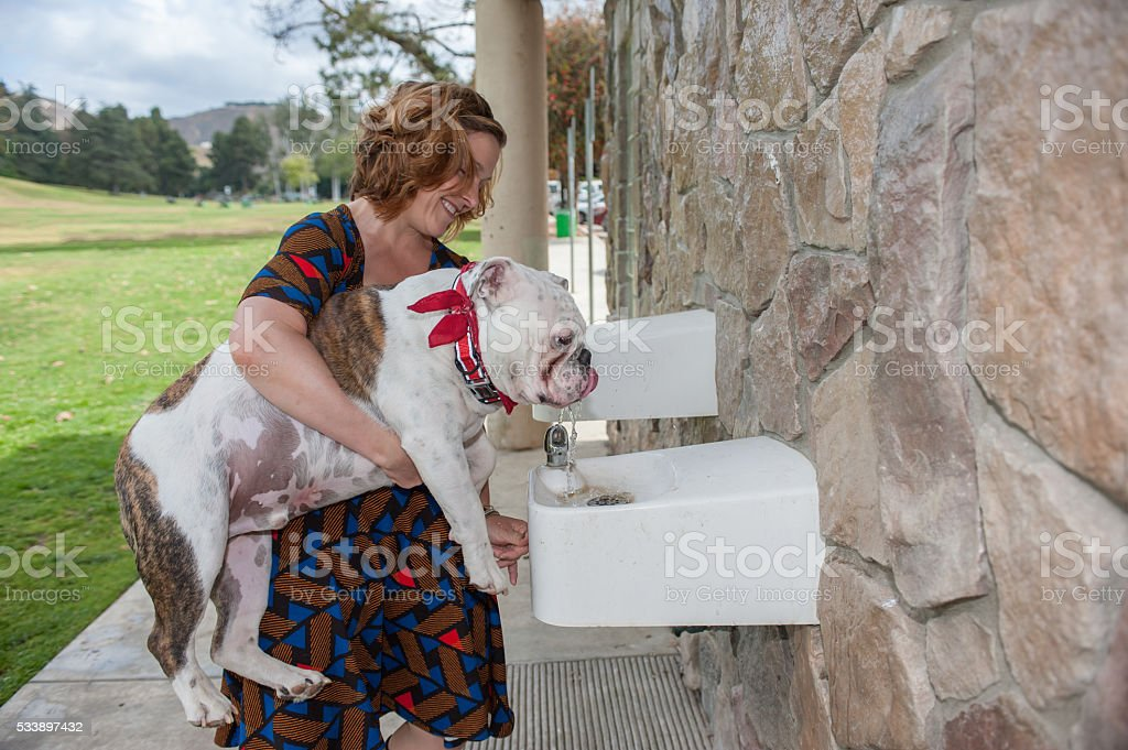 Helping her puppy get a drink stock photo