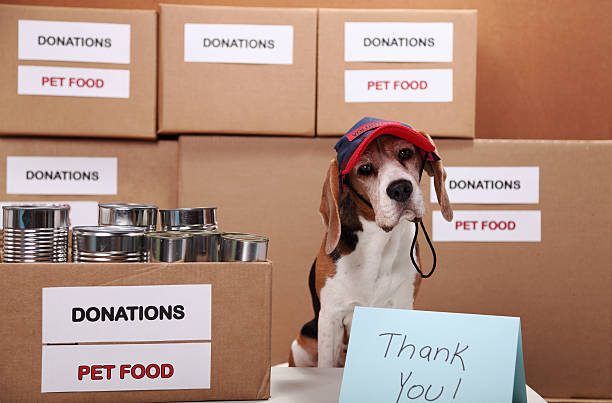 Helping Homeless Dogs stock photo