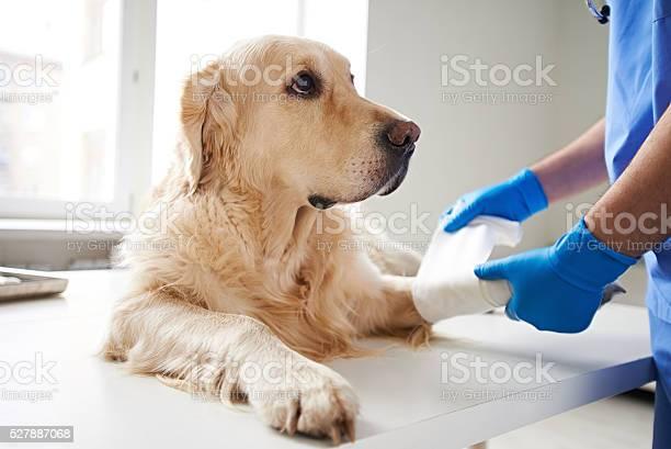 Helping injured dog picture id527887068?b=1&k=6&m=527887068&s=612x612&h=ohn59emgsozrctubahoflesvd0wjq77gmh9pltcph6c=