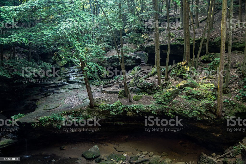 Hemlock Forest Of Hocking Hills State Park stock photo