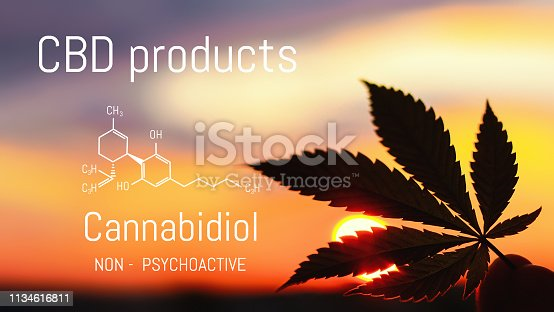 istock Hemp CBD oil, Medical marijuana products including cannabis leaf. Herbal organic medicine product. Natural herb essential from nature. Chemical formula of cannabidiol 1134616811