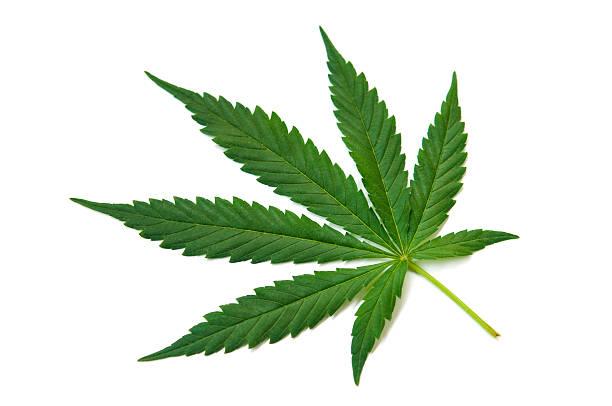 El cáñamo (cannabis)-de hoja verde sobre blanco - foto de stock