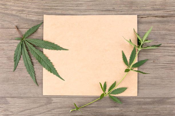Hemp leaves and flowers with craft blank paper on old grunge wooden background. Top view. Minimalistic mockup. – zdjęcie