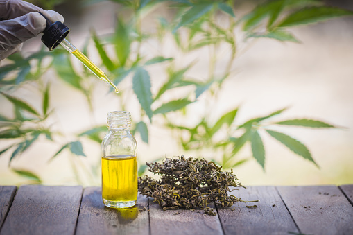 1134024584 istock photo Hemp oil, Medical marijuana products including cannabis leaf, dried bud, cbd  and hash oil over black wood background 1140327517
