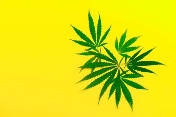 Medical Marijuana For Cancer Patients And Everything In Between