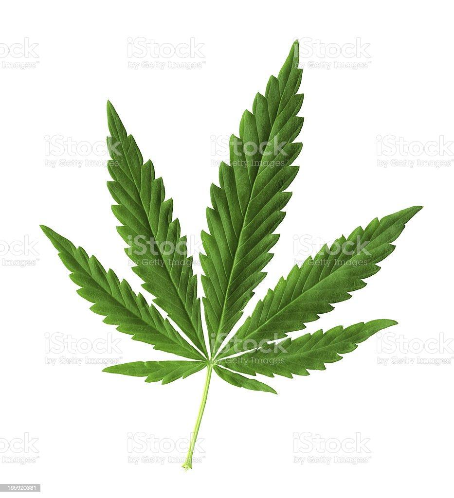 Hemp (cannabis) royalty-free stock photo