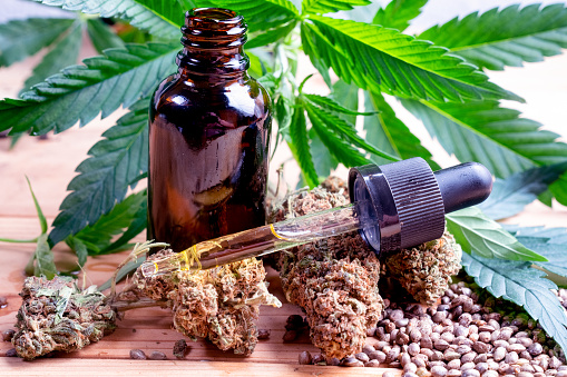 1134024584 istock photo A Hemp Plant, Hemp Seeds, CBD Oil Bottle And Dropper Full Of Oil On Dried Hemp Buds 1212015074