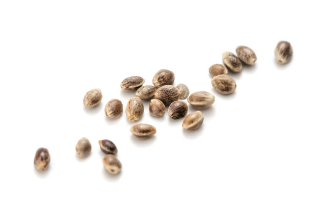 hemp seeds - seed stock photos and pictures