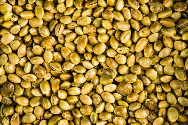 hemp seeds, unpeeled in a closeup stock photo
