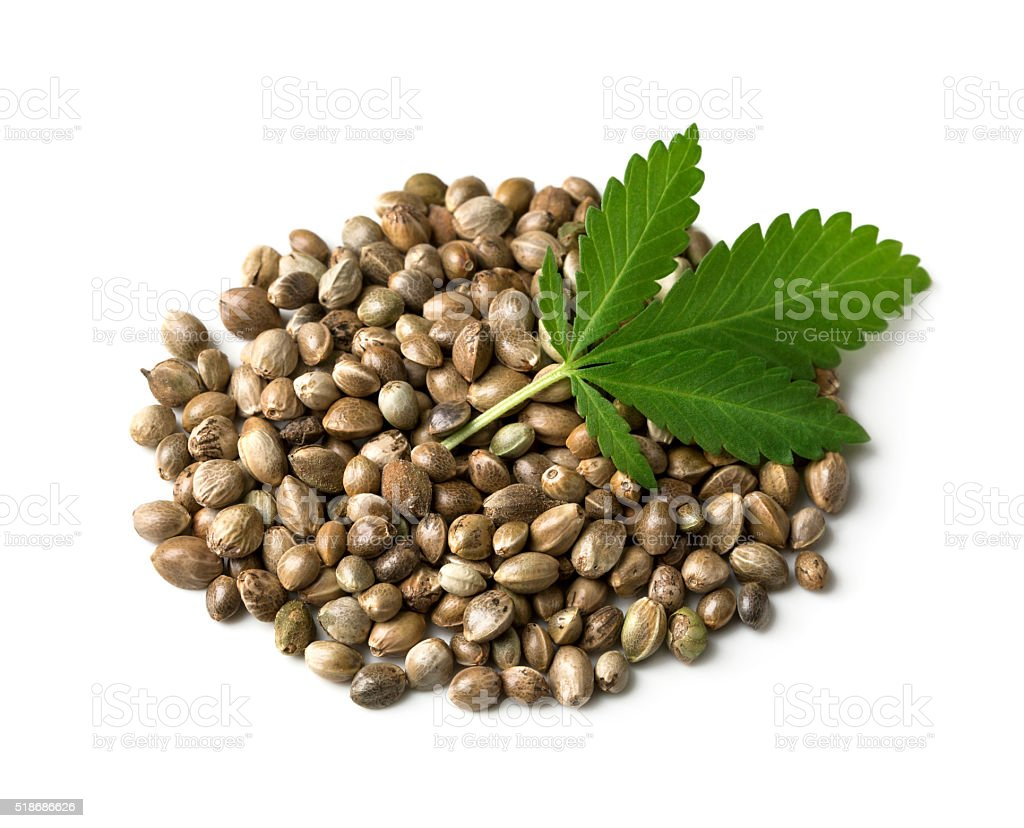 Hemp seeds with a green leaf stock photo