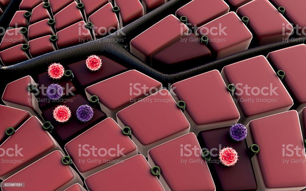Hepadnavirus stock photo