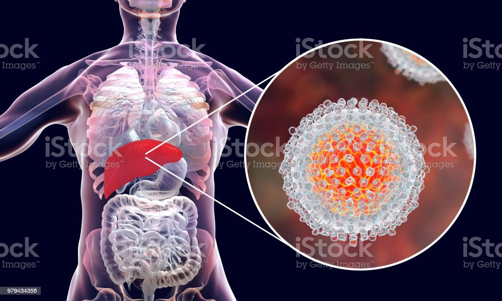 Hepatitis C virus infection medical concept stock photo