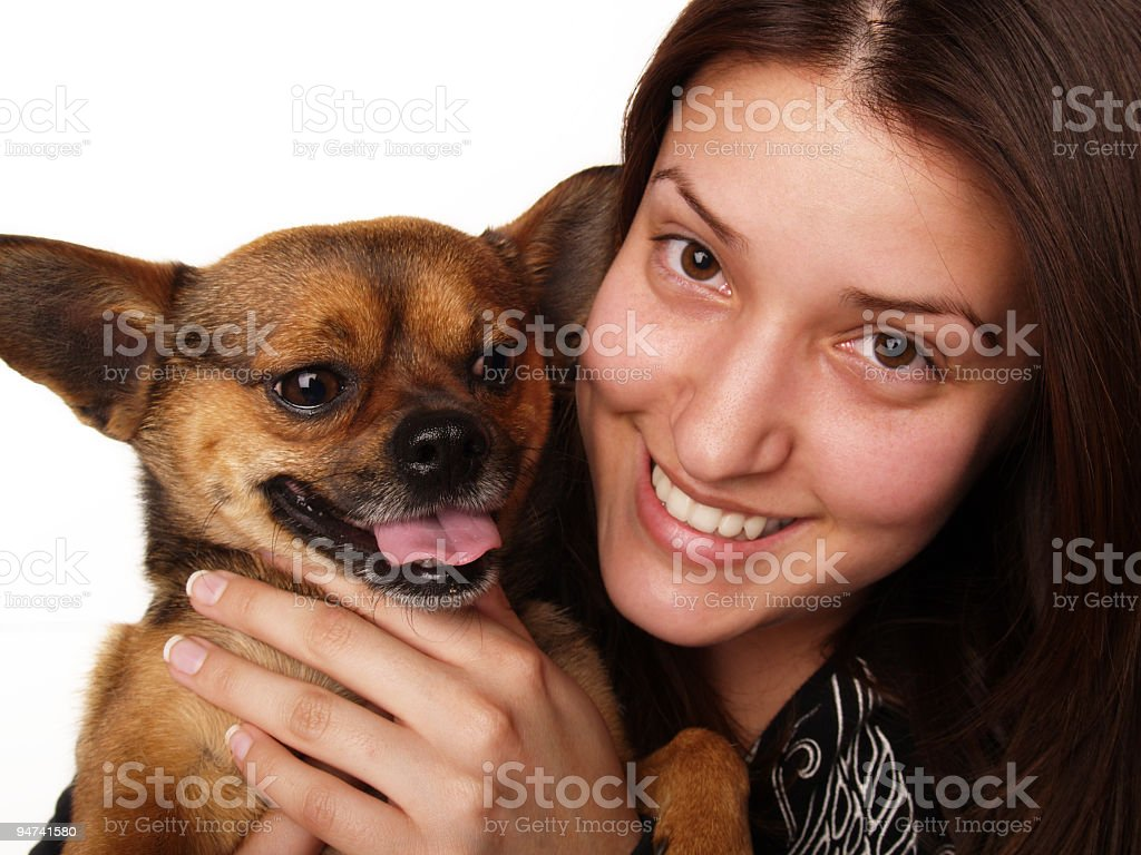 Her Little Chihuahua royalty-free stock photo