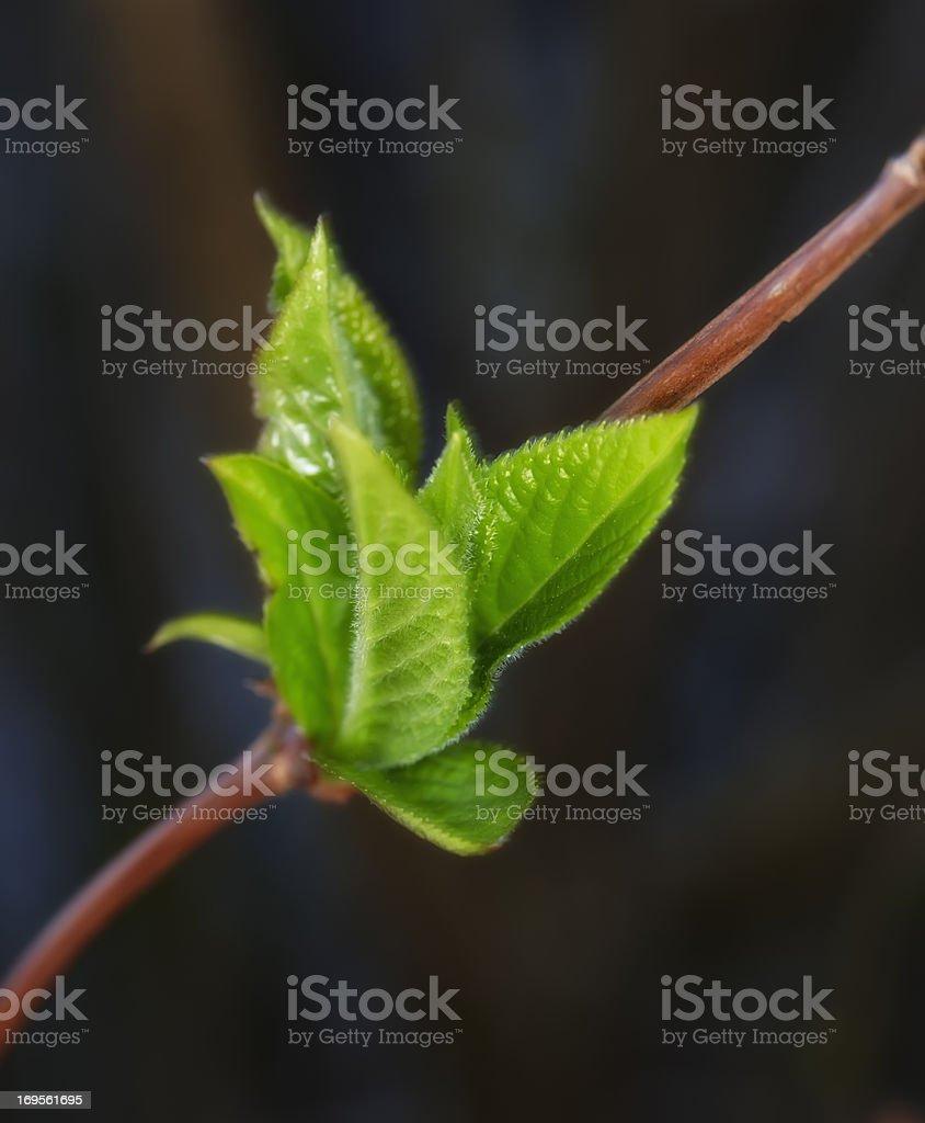 Läutet die neue Saison – angehende Bäumen Lizenzfreies stock-foto