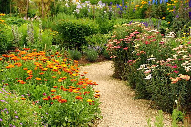 herb and flower garden stock photo - Flower Garden Path
