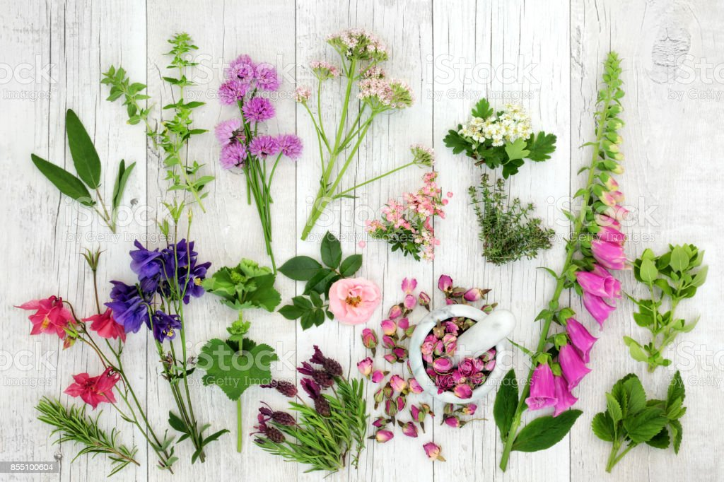Herb and Flower Medicinal Selection stock photo