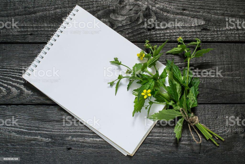 Herb Bennett (Geum urbanum) and notebook stock photo