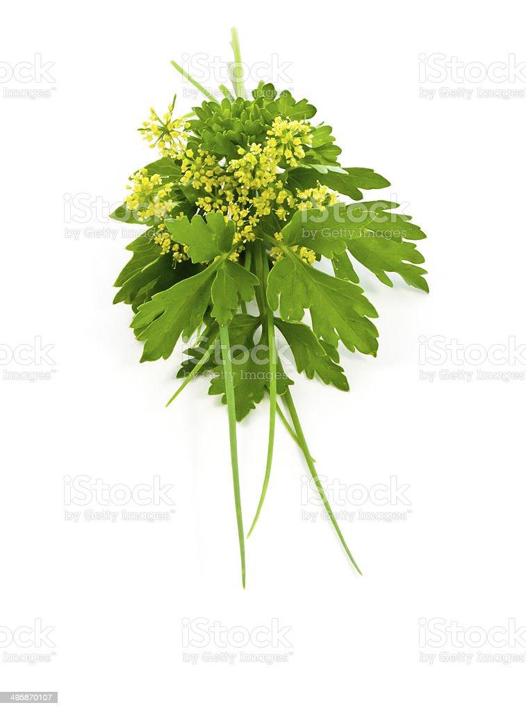Herb bouquet stock photo