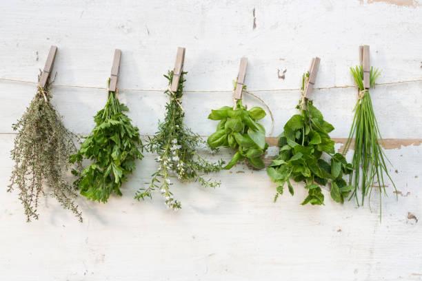 掛在繩子上的草本束 - 草本植物 個照片及圖片檔