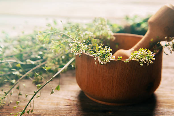 Herb capsella in mortar stock photo