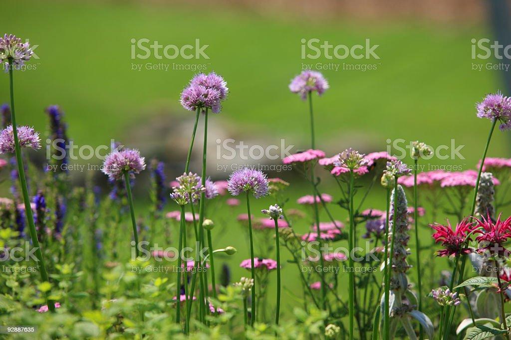 Herb garden background royalty-free stock photo