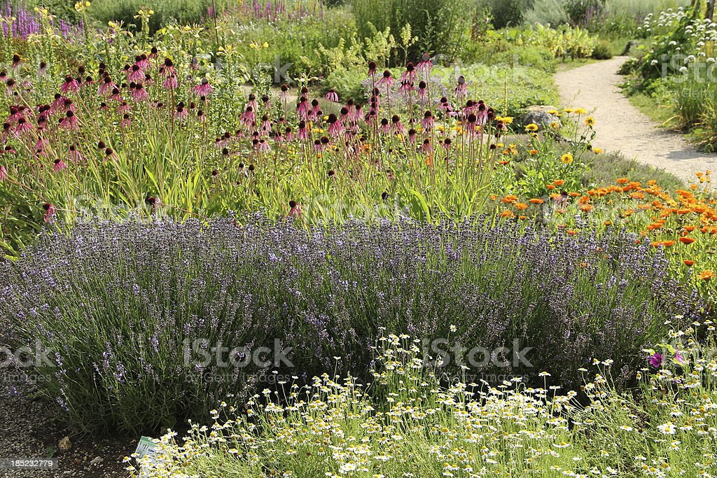 Herb garden with flowers