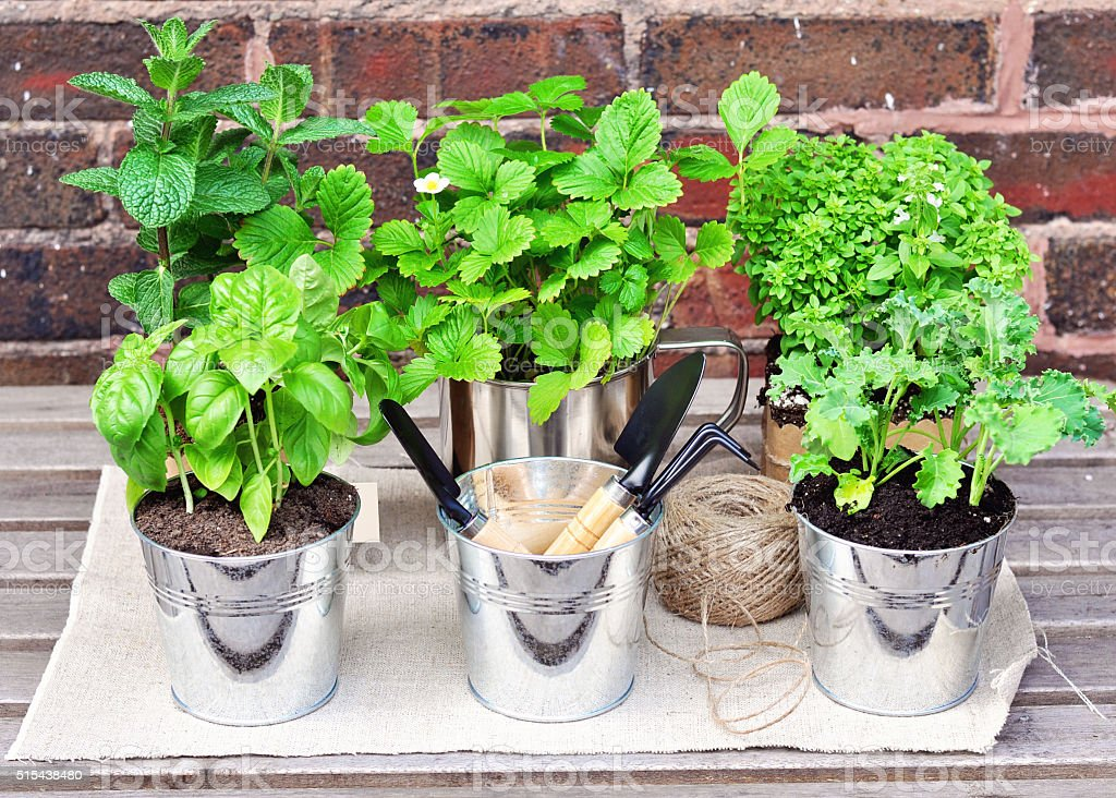 Herb garden. Mint, basel, strawberry, thyme, kale. stock photo