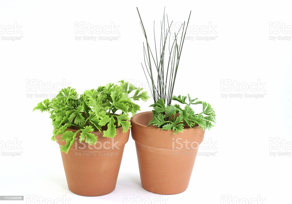 herb garden parsley and chives royalty-free stock photo