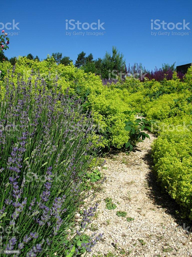 Garden-path across herb garden
