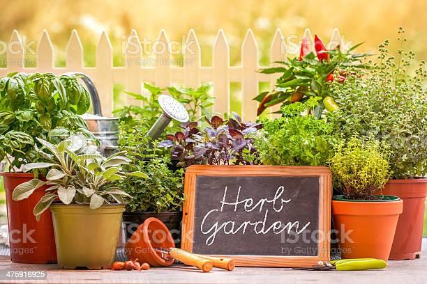 Photo of Herb garden