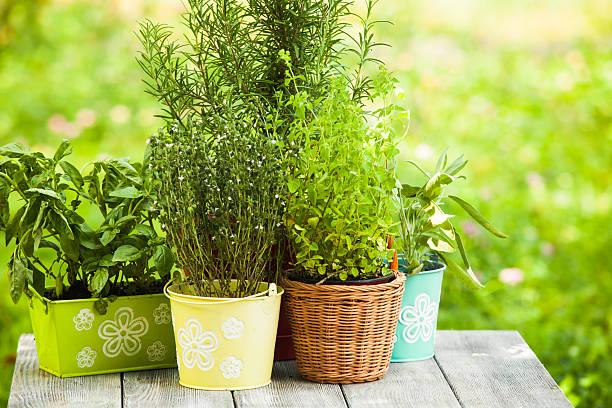 Herb garden – Foto