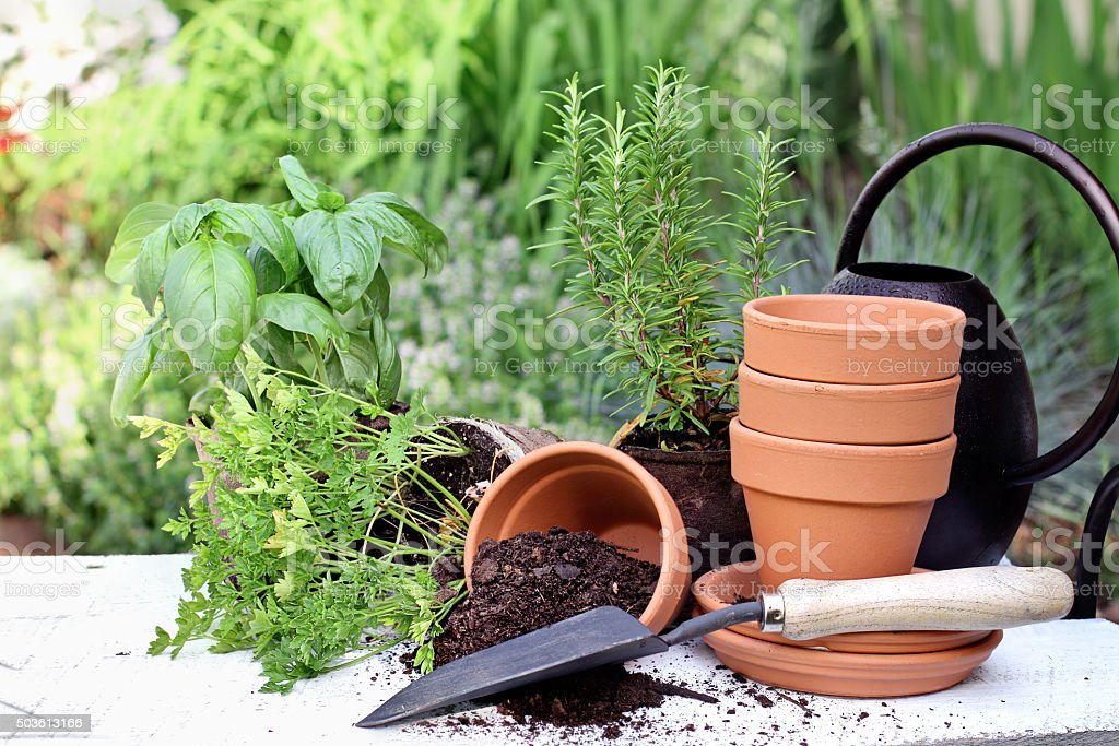 Herb Gardening and Trowel stock photo
