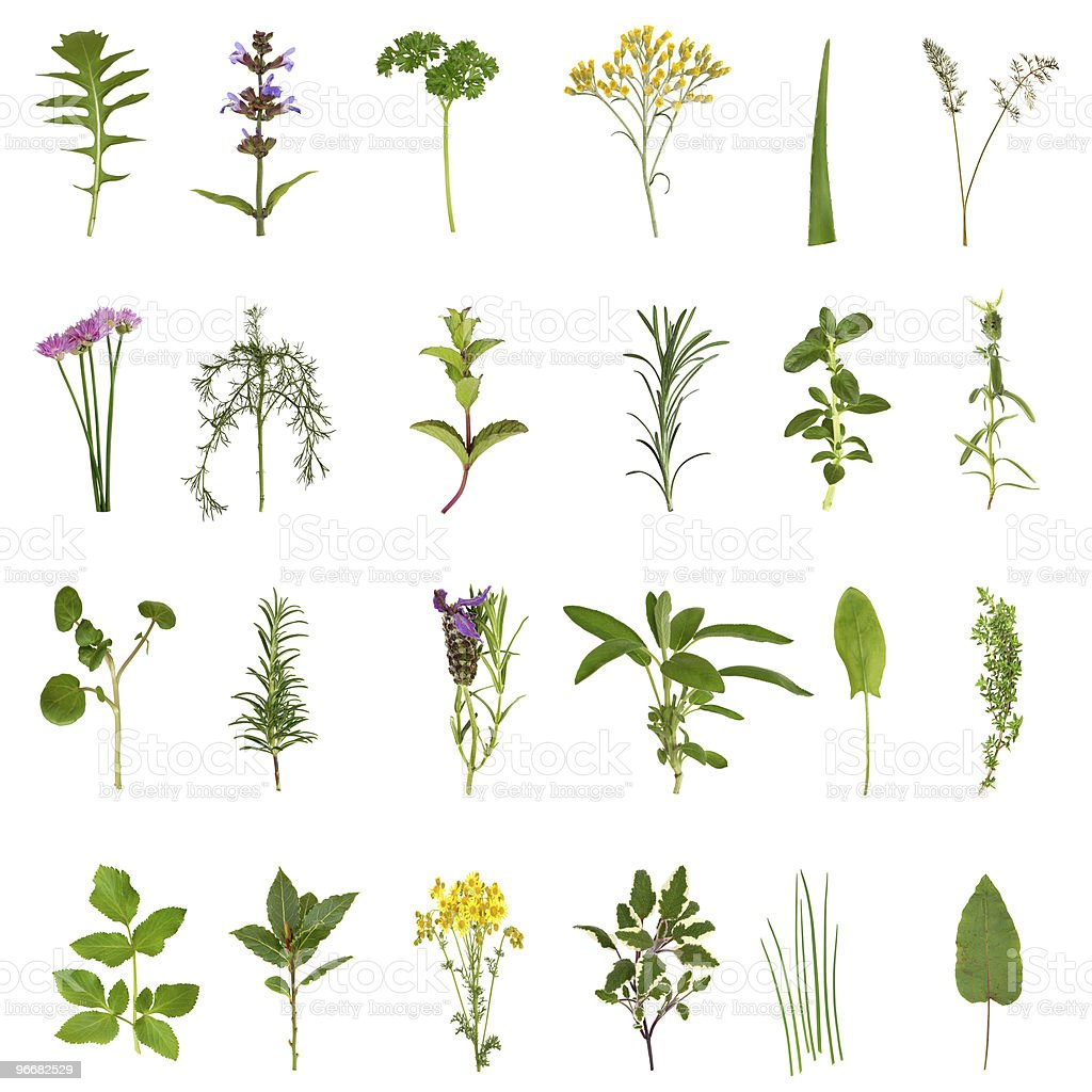 Herb Leaf and Flower Collection stock photo